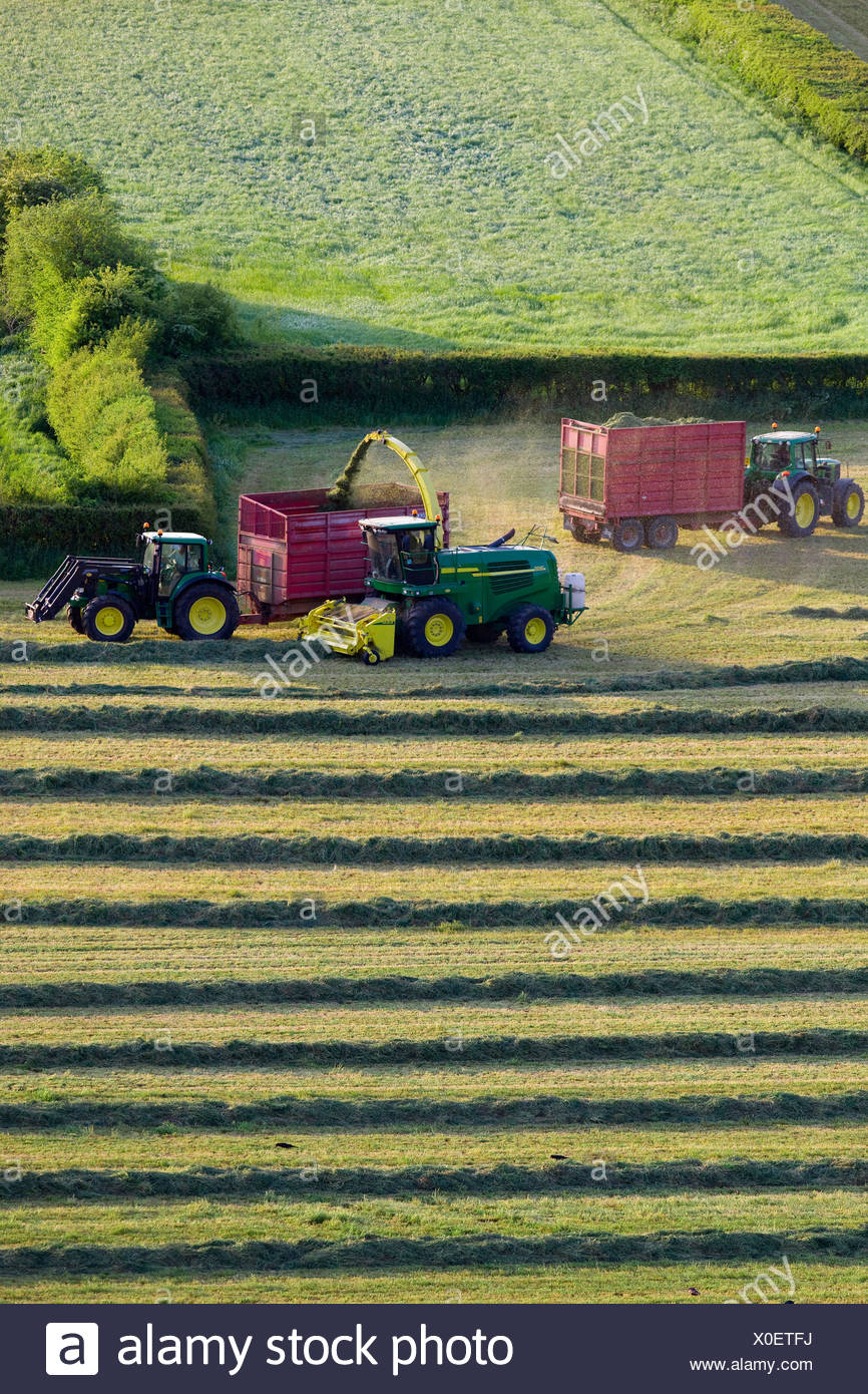 Tractors cutting silage and filling trailers in field - Stock Image