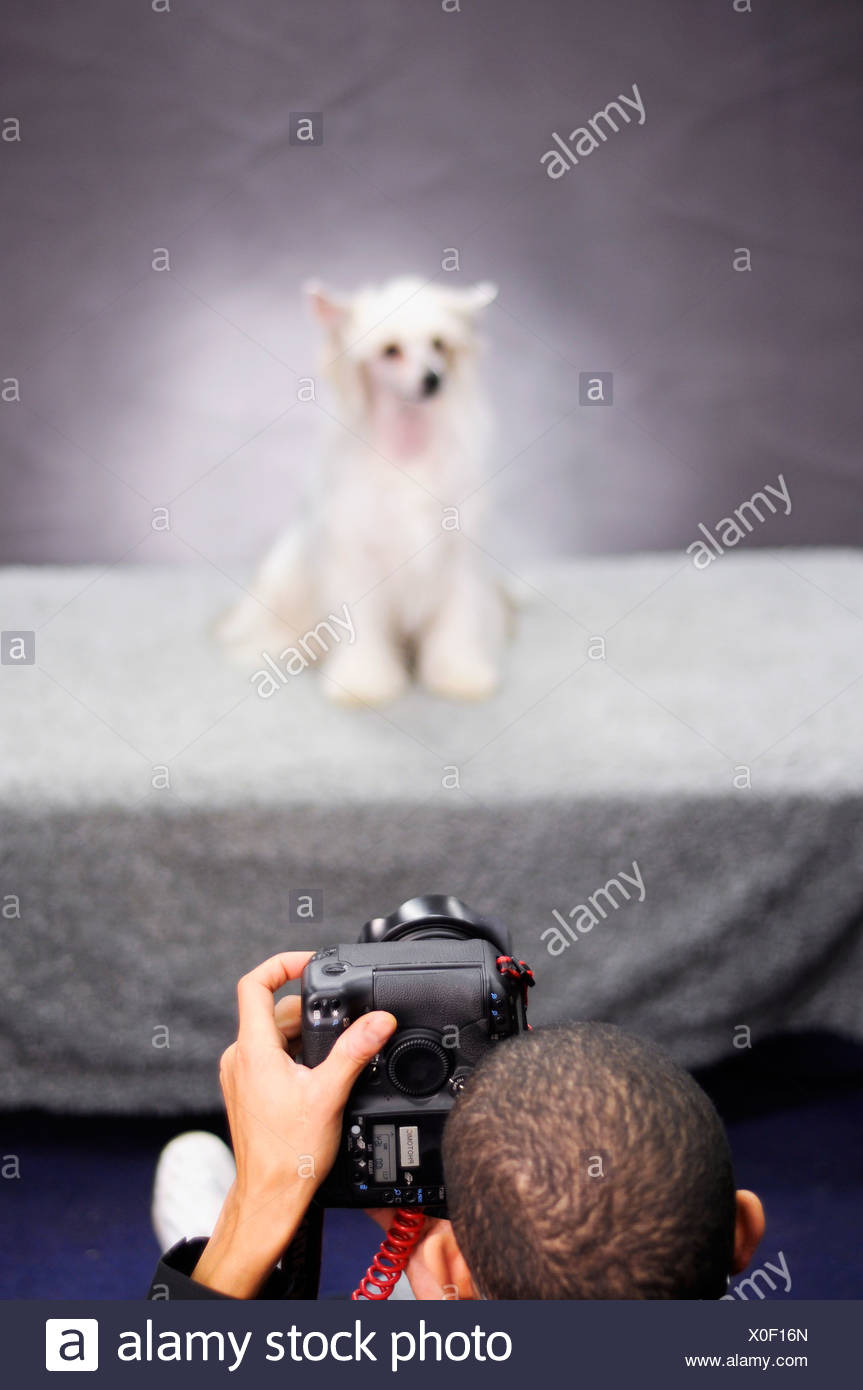 Boy taking photo of dog - Stock Image