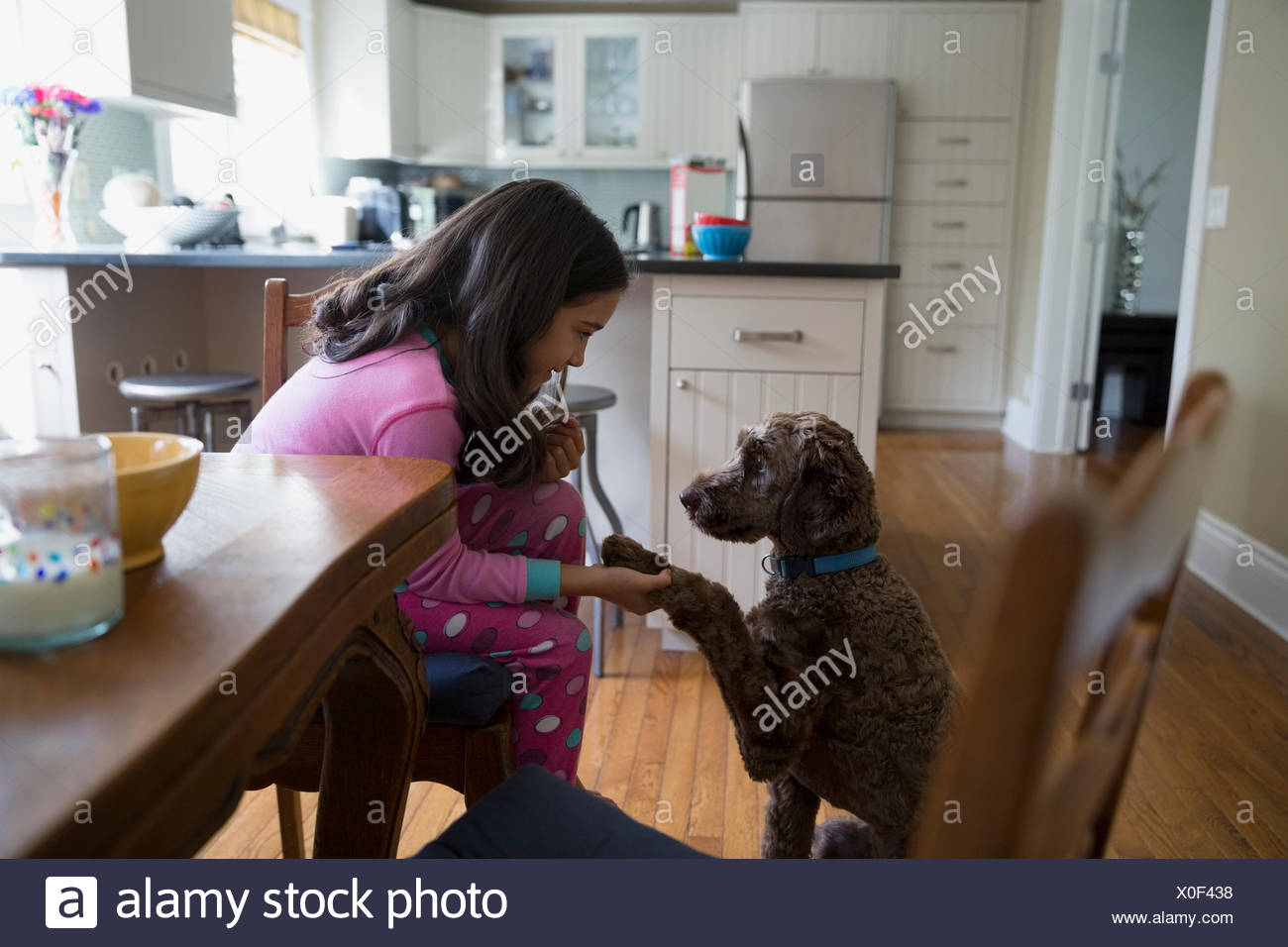 Girl shaking paw with dog in kitchen - Stock Image