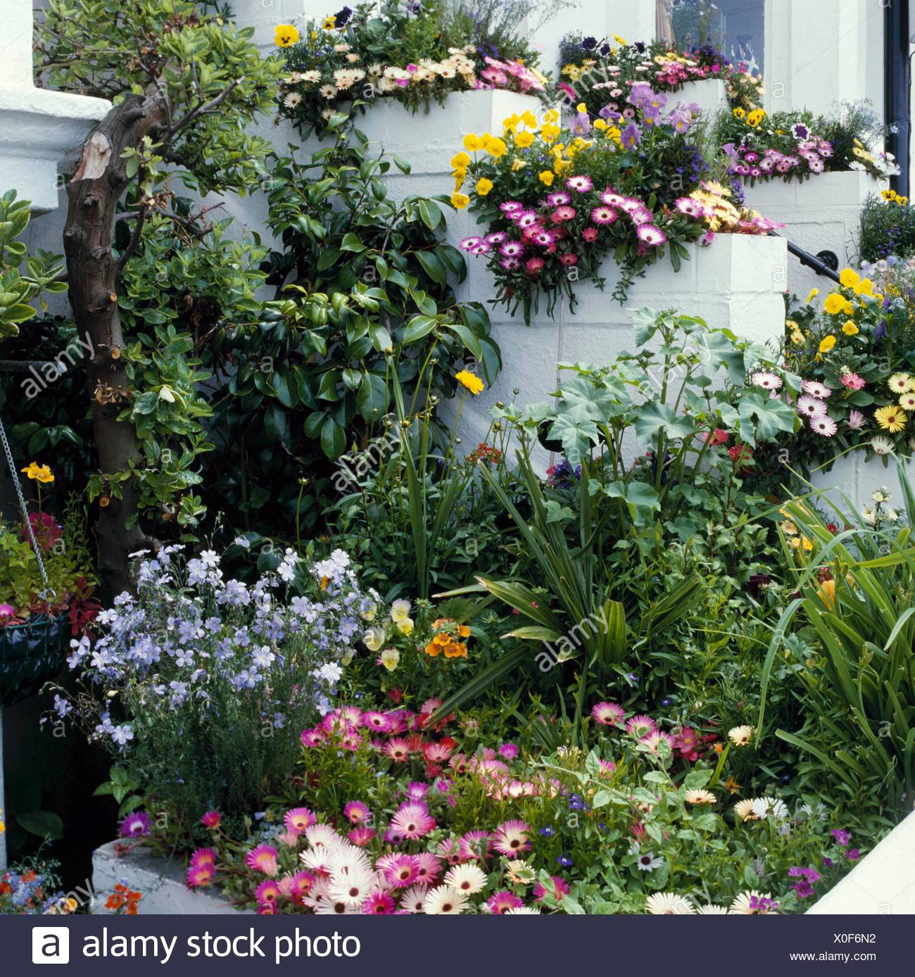 Front Garden   Annuals Grown In Containers And Raised Bed Fill This Front  Garden FRO031834 Pho