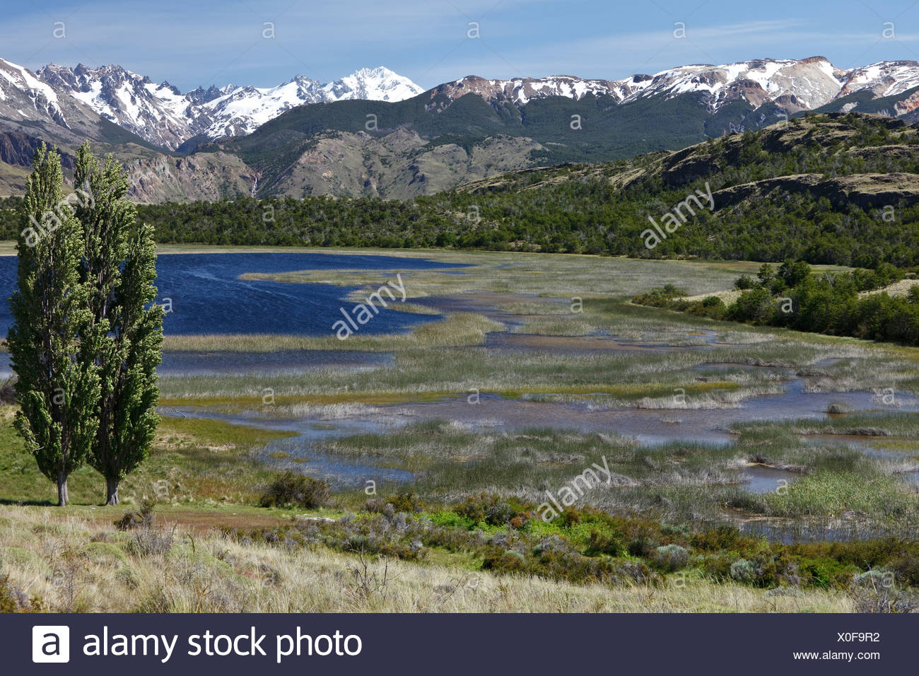 Poplar trees in the wind in front of the Chilean Andes on the Rio Chacabuco, Cochrane, Region de Aysen, Patagonia, Chile Stock Photo
