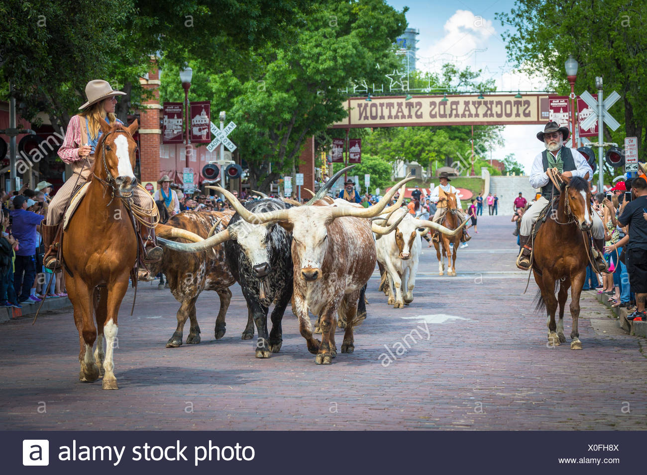 Cattle Drive Texas Longhorn Cattle With Cowboys And Cowgirl Stockyards Fort Worth Texas Usa Stock Photo Alamy