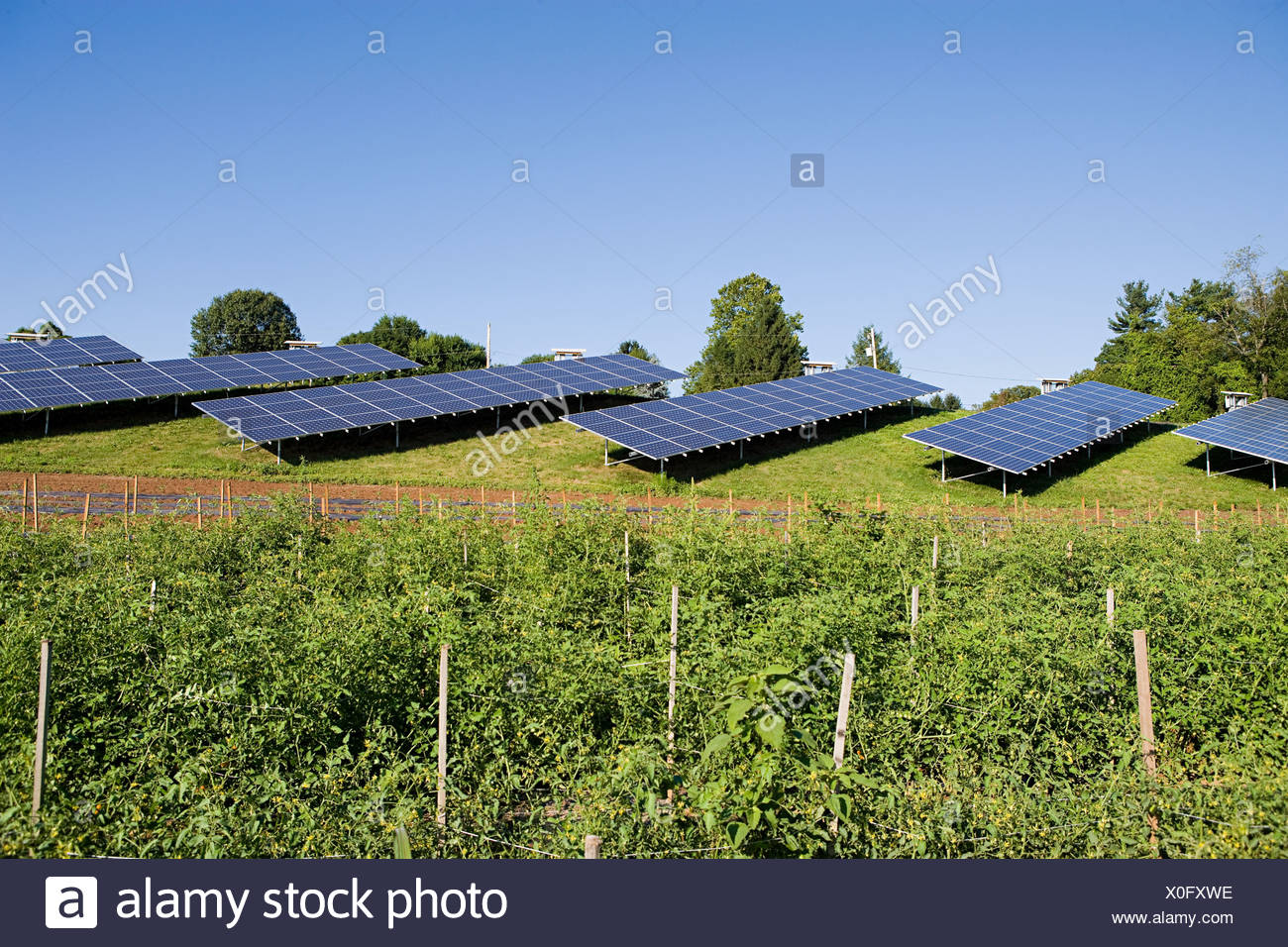 Solar panels in field, Pennsylvania - Stock Image