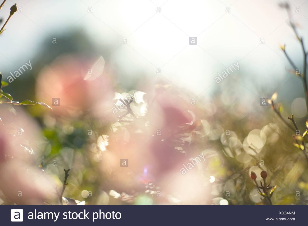 Wildflowers - Stock Image