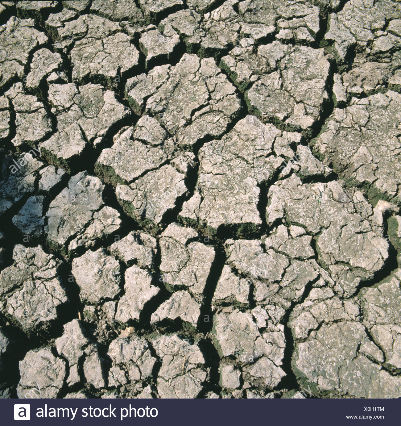 Dry and cracked soil drying out in a severe drought - Stock Image