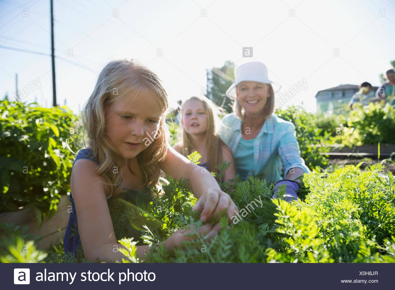 Grandmother and granddaughters tending to plants in garden - Stock Image