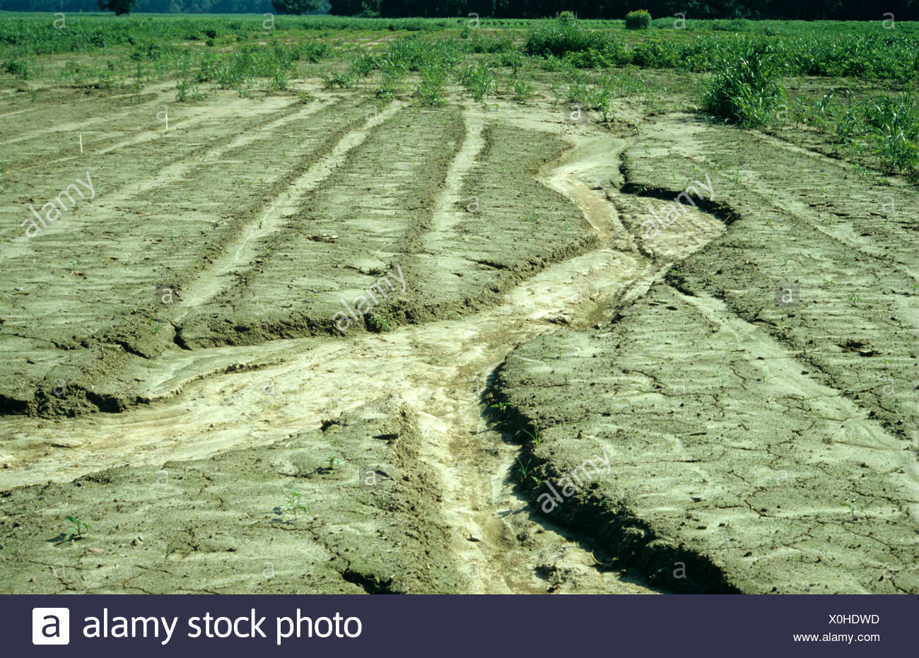 Erosion gully or rill cut in field soil after heavy rains - Stock Image