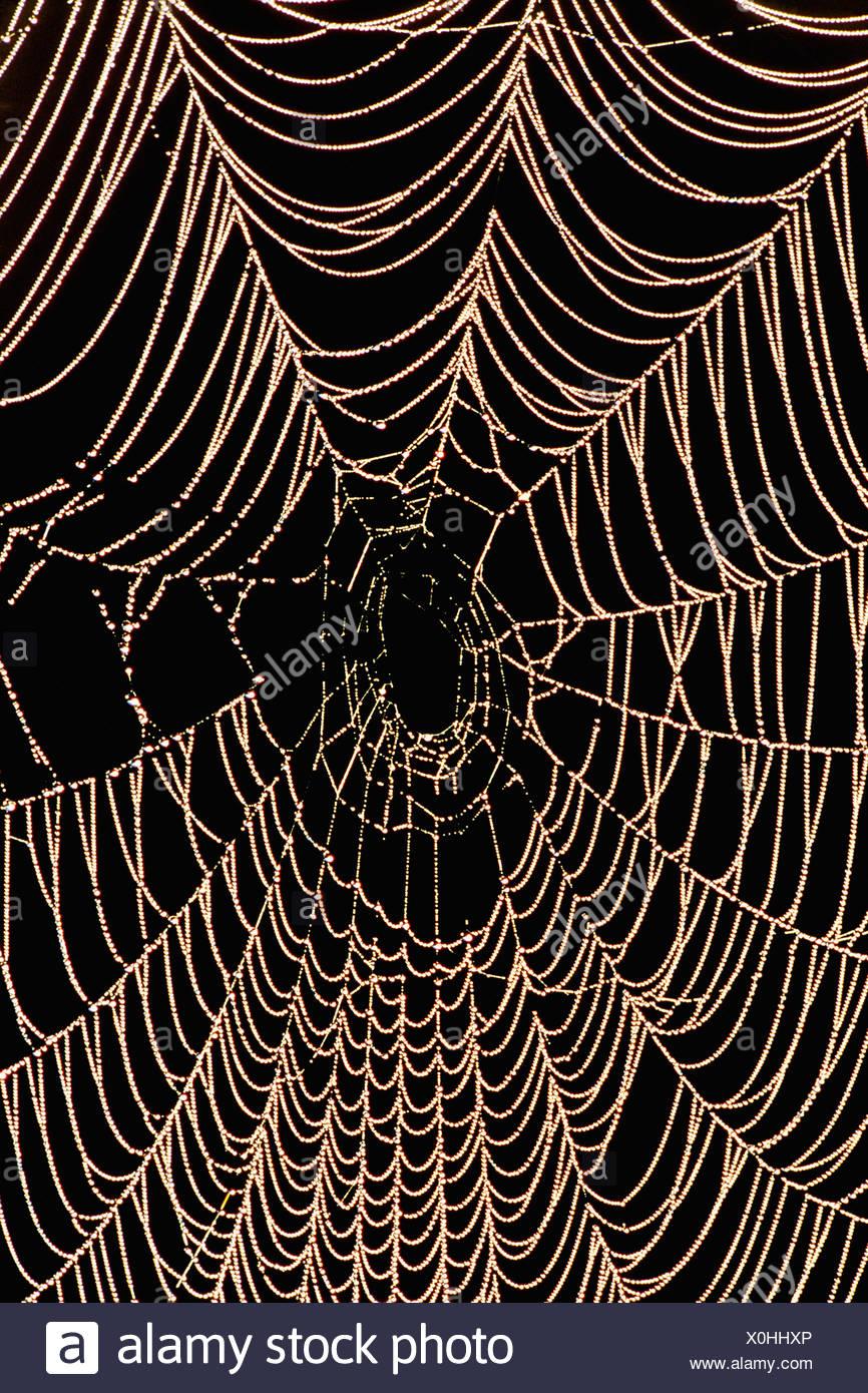 Monterey Bay California spider web with moisture Monterey Bay California - Stock Image