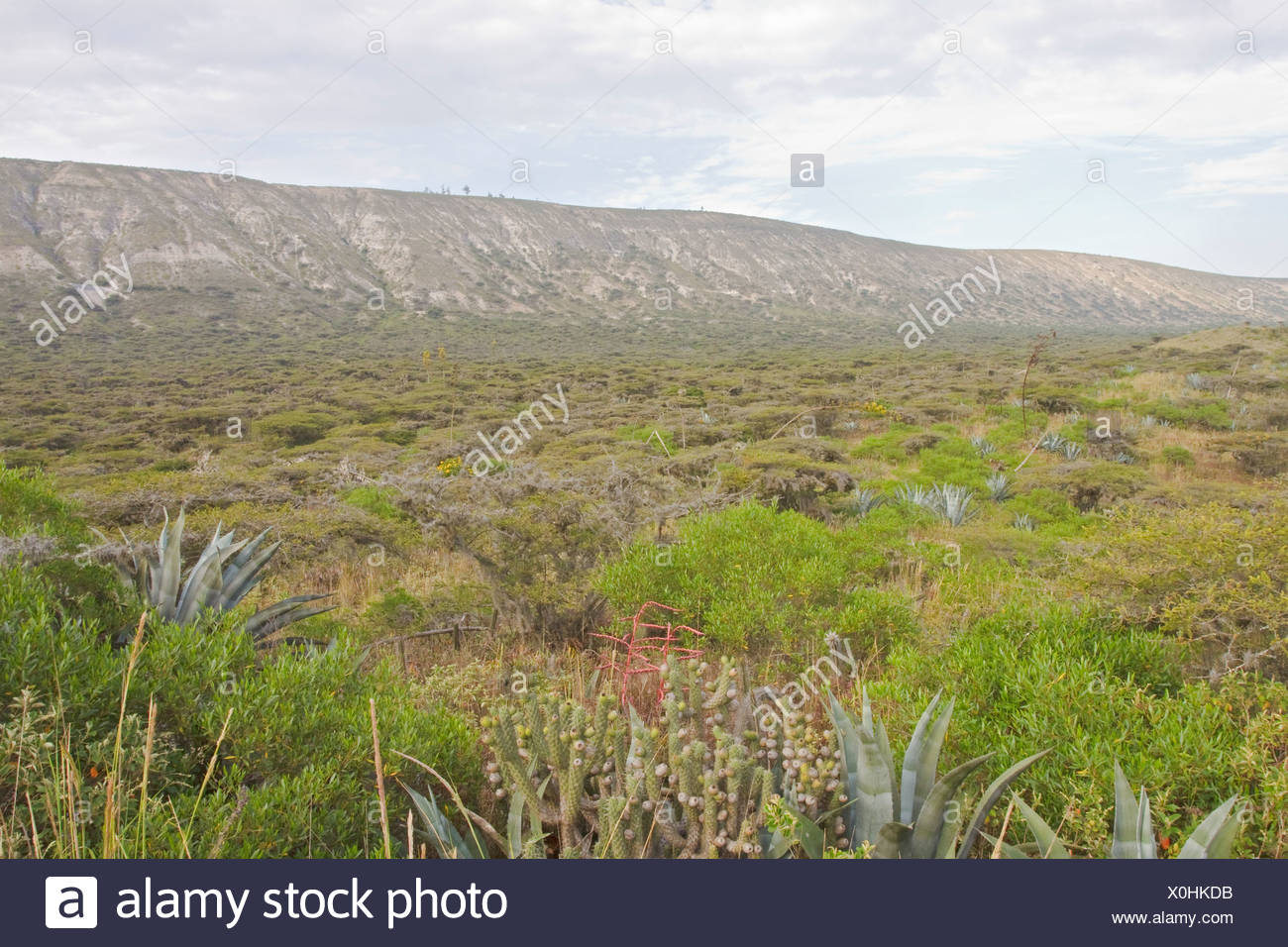 The Jerusalem protected area in central Ecuador. - Stock Image