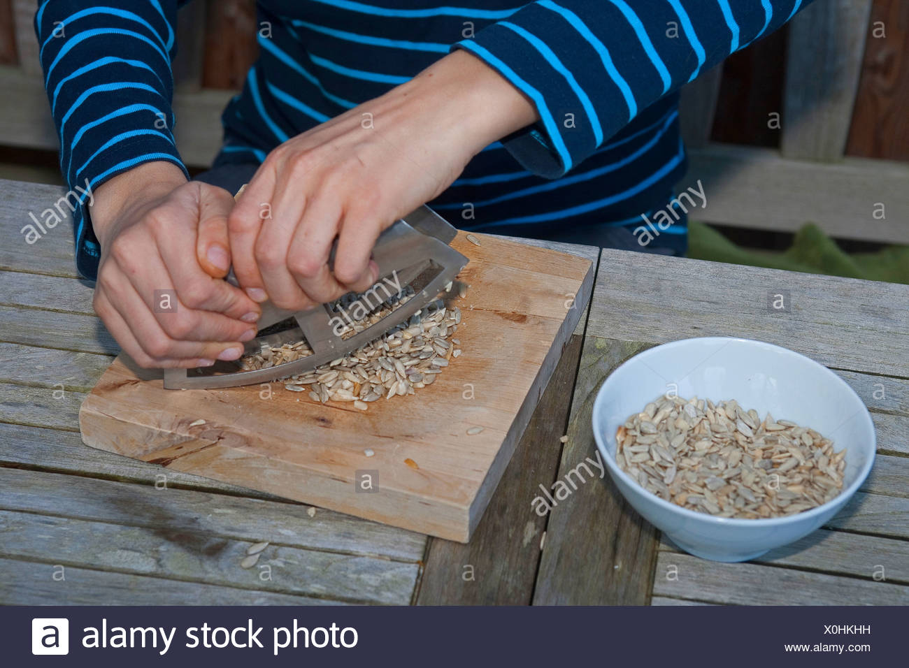 boy making pesto from self-collected walnuts and sunflower seeds, olive oil and parmesan cheese, sunflower seeds are hackled, Germany - Stock Image