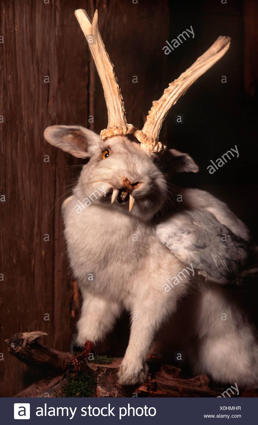 Wolpertinger, Bavarian fabulous creature, Germany - Stock Image
