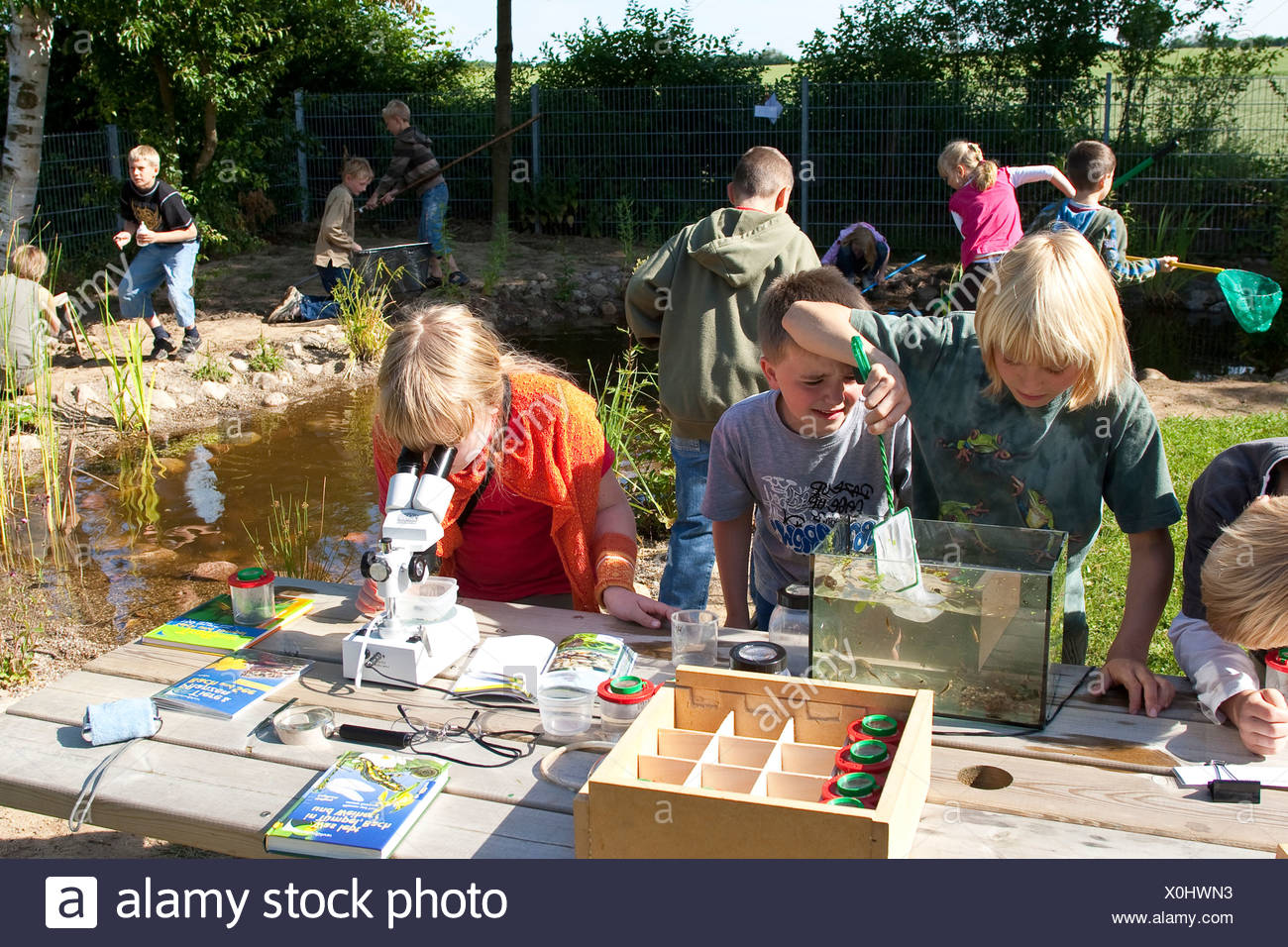 primary school pupils watching animals in an aquarium and under a microscope caught in the self-built pond in the school garden - Stock Image