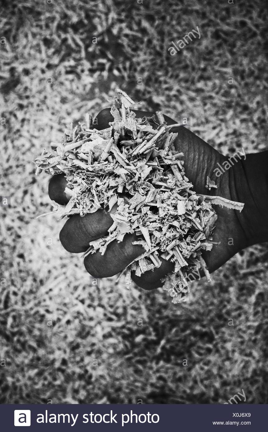 Cropped Image Of Man Holding Wooden Shavings - Stock Image