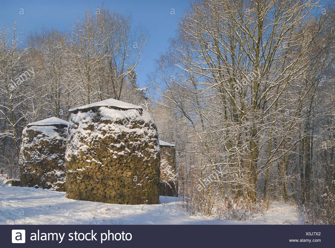 Snow-covered forest with covered piles of wood, timber industry - Stock Image