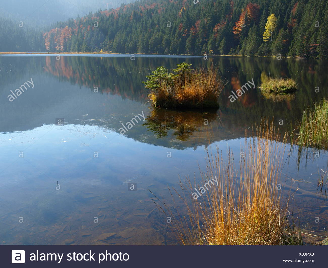 Bergsee Insel Schwimmen Wald Baum Ufer Herbst Stock Photos Bergsee