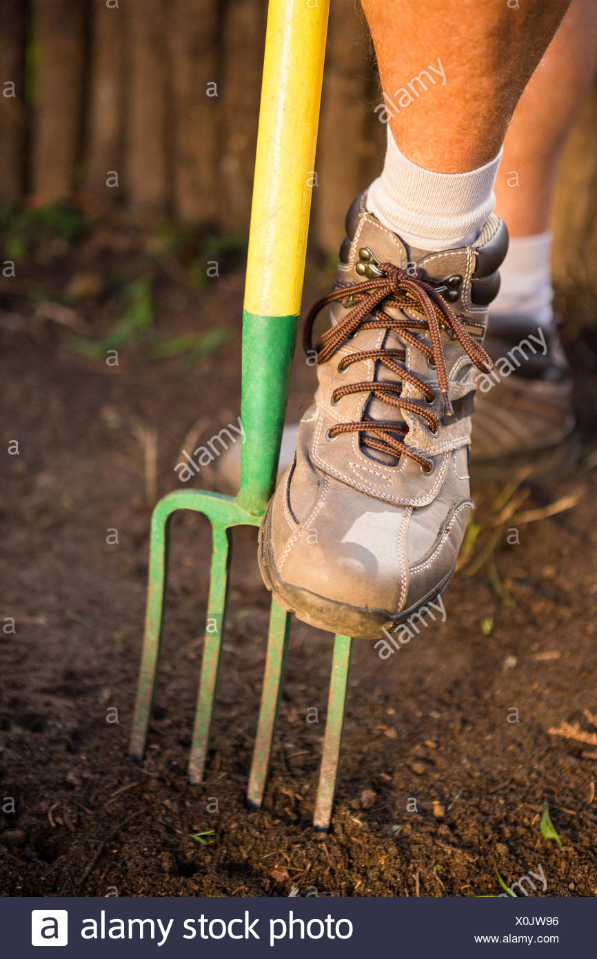 Low section of male gardener stepping on fork at garden - Stock Image