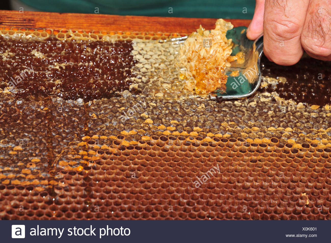 Honey Extraction Stock Photos Honey Extraction Stock Images Alamy