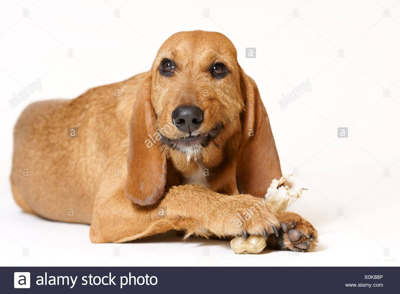 eating dog - Stock Image