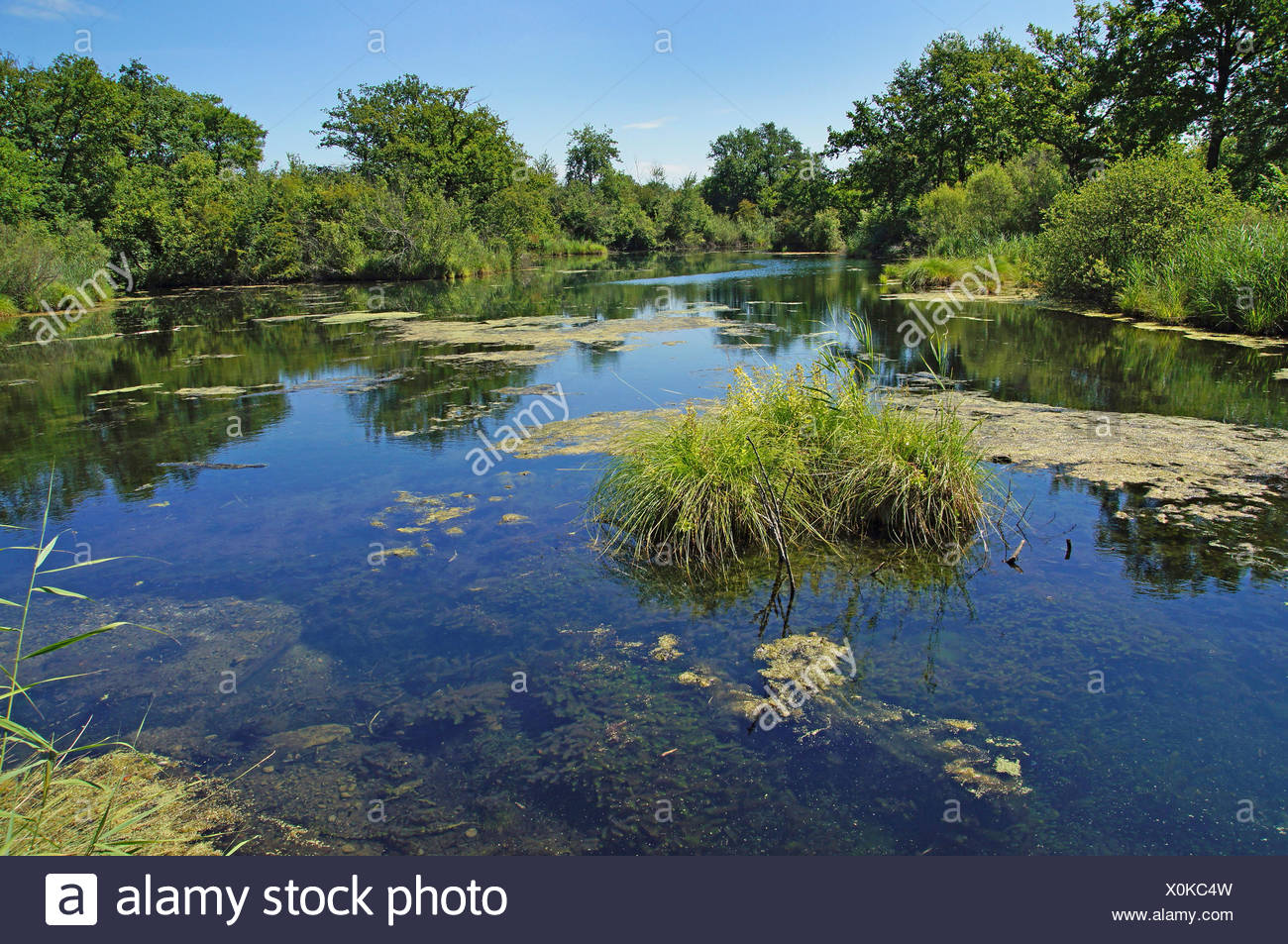 Blaues Loch (Blue Hole), river head at the Rhine, Germany, Baden-Wuerttemberg, Taubergiessen - Stock Image