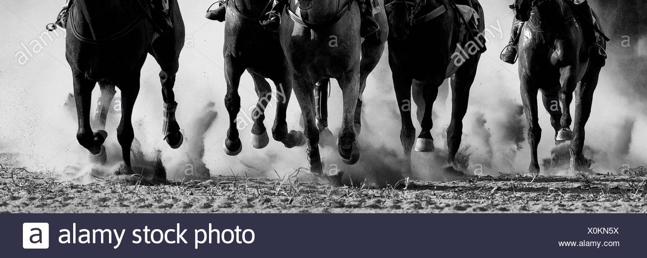 Horse Racing in Pardubice - Stock Image