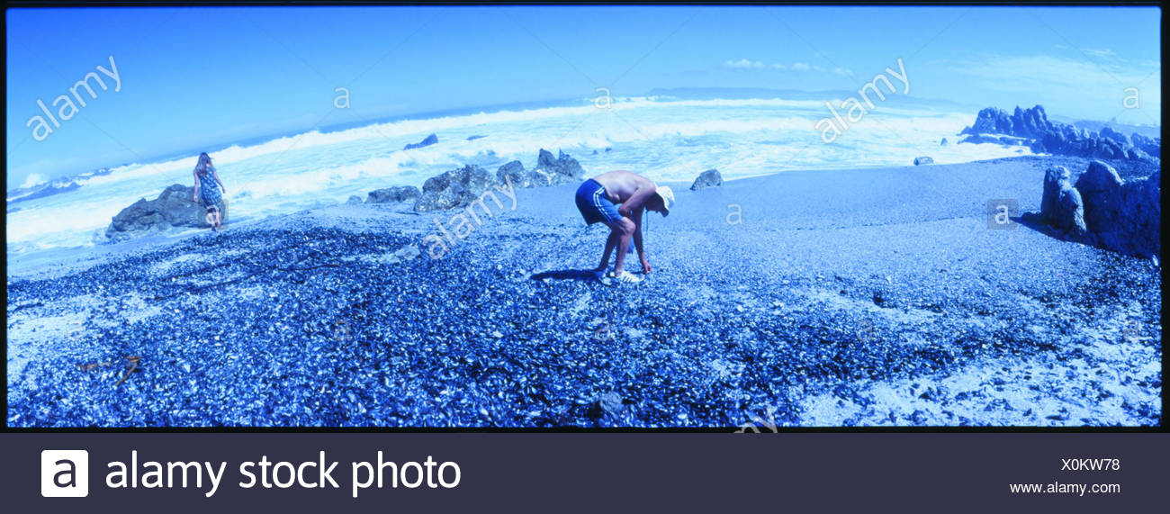 Panoramic Shot Of Man Collecting Something At Beach - Stock Image