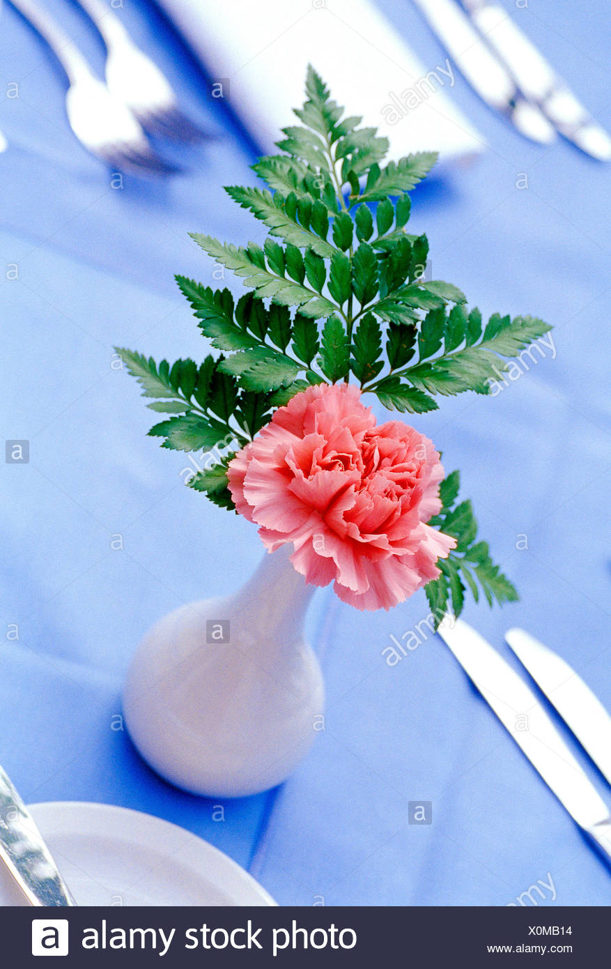 Still life. Pink Carnation in vase on dining table. - Stock Image