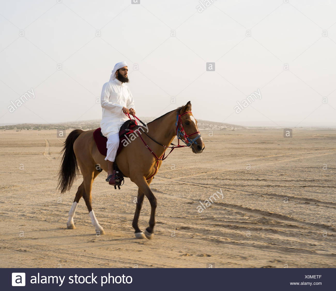 An Arab horseman prepares for the day's hunt during the Al Galayel Hunting Festival in Qatar. The annual event pits teams of hunters against one another using traditional Arab  hunting techniques. - Stock Image