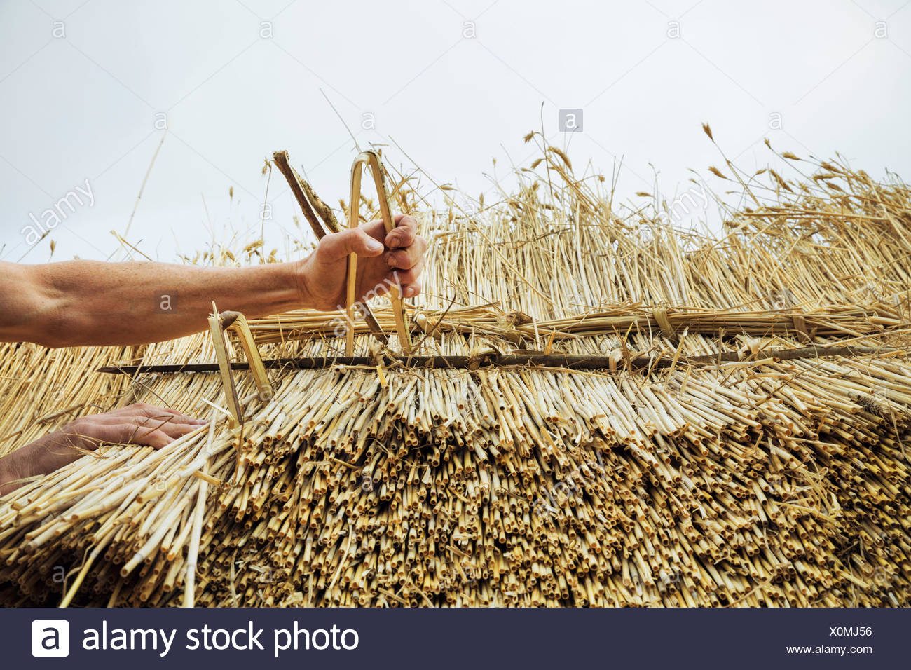 Man thatching a roof, inserting hazel wood spars to fasten the straw. - Stock Image