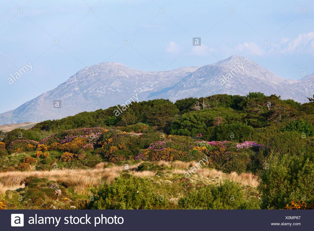 Twelve Pins, view from Bellanaboy, Connemara, County Galway, Republic of Ireland, Europe - Stock Image