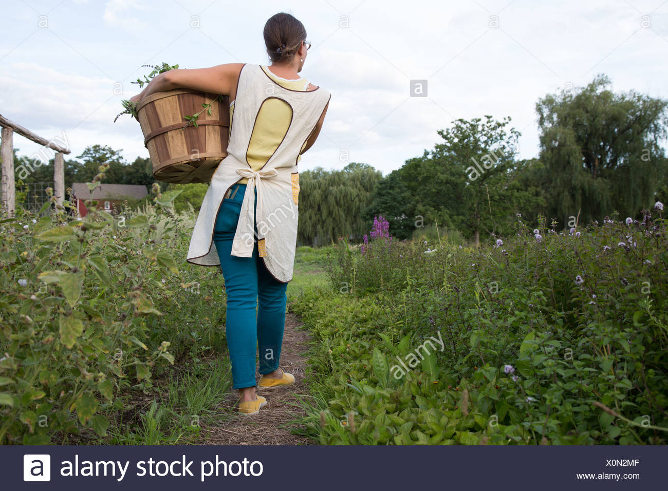 Woman carrying basket of plants on family herb farm - Stock Image