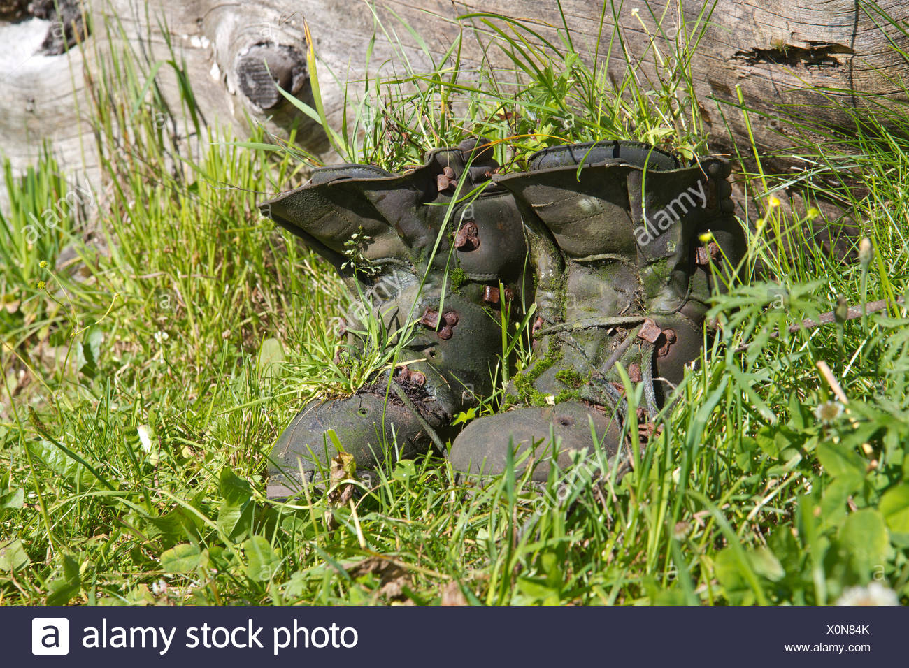 overgrown old hiking boots with grass Stock Photo