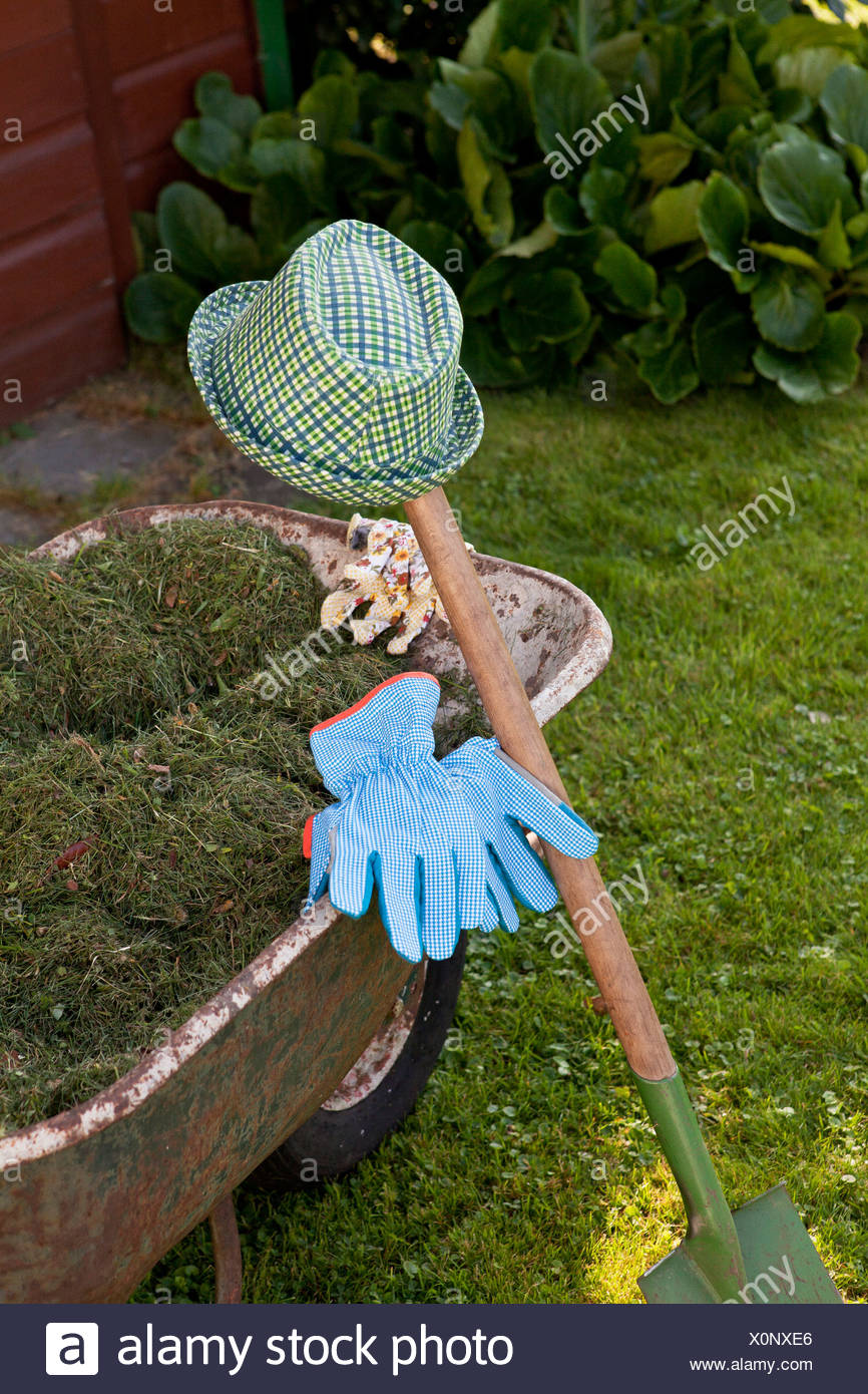 Mown grass in a wheelbarrow, Munich, Bavaria, Germany - Stock Image
