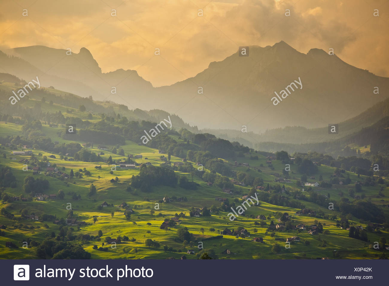 Switzerland, St. Gallen, Ober Toggenburg, alpine grassland, evening light, Stock Photo