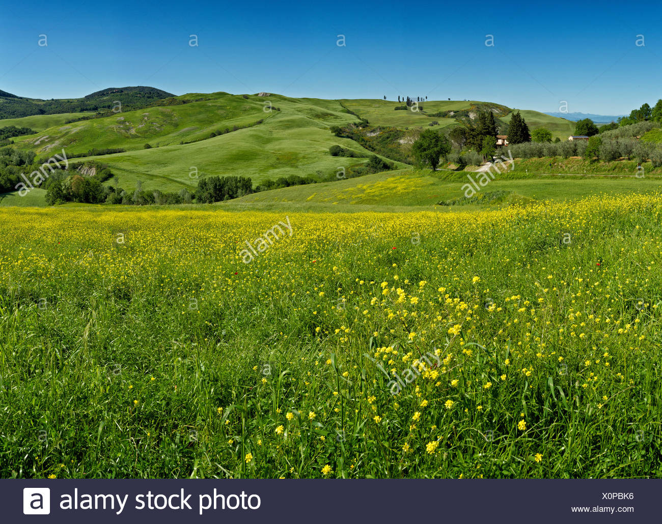 Volterra, Italy, Europe, Tuscany, Toscana, meadow, hill, green, blue - Stock Image