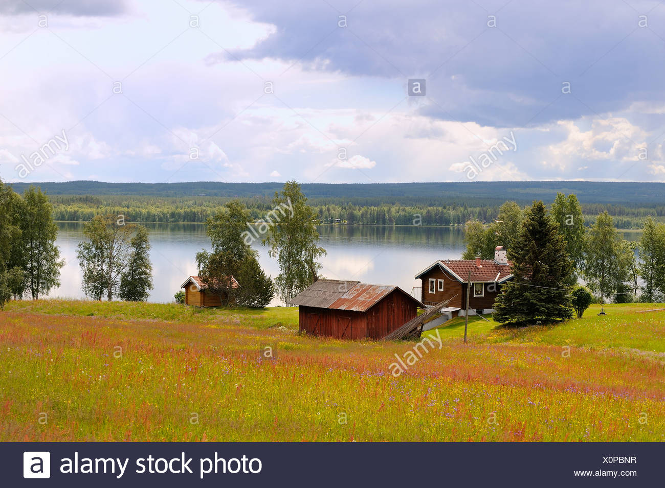 Country houses on landscape by peaceful lake at Öresjön - Stock Image