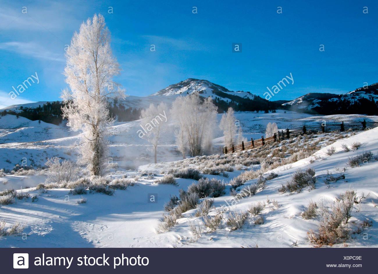 Winter, Yellowstone NP USA - Stock Image