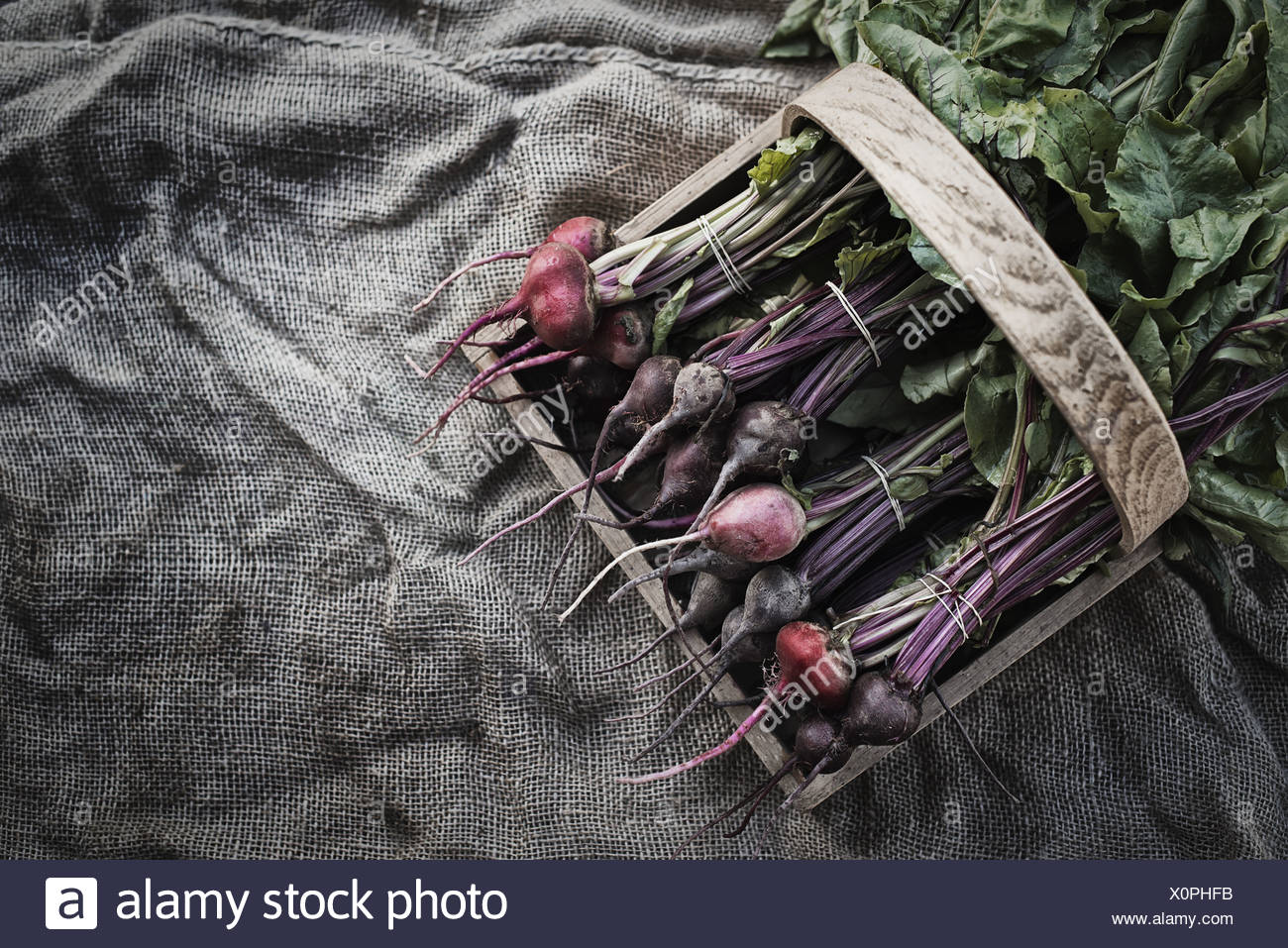 Woodstock New York USA Organic Assorted Beets with stems just harvested Stock Photo