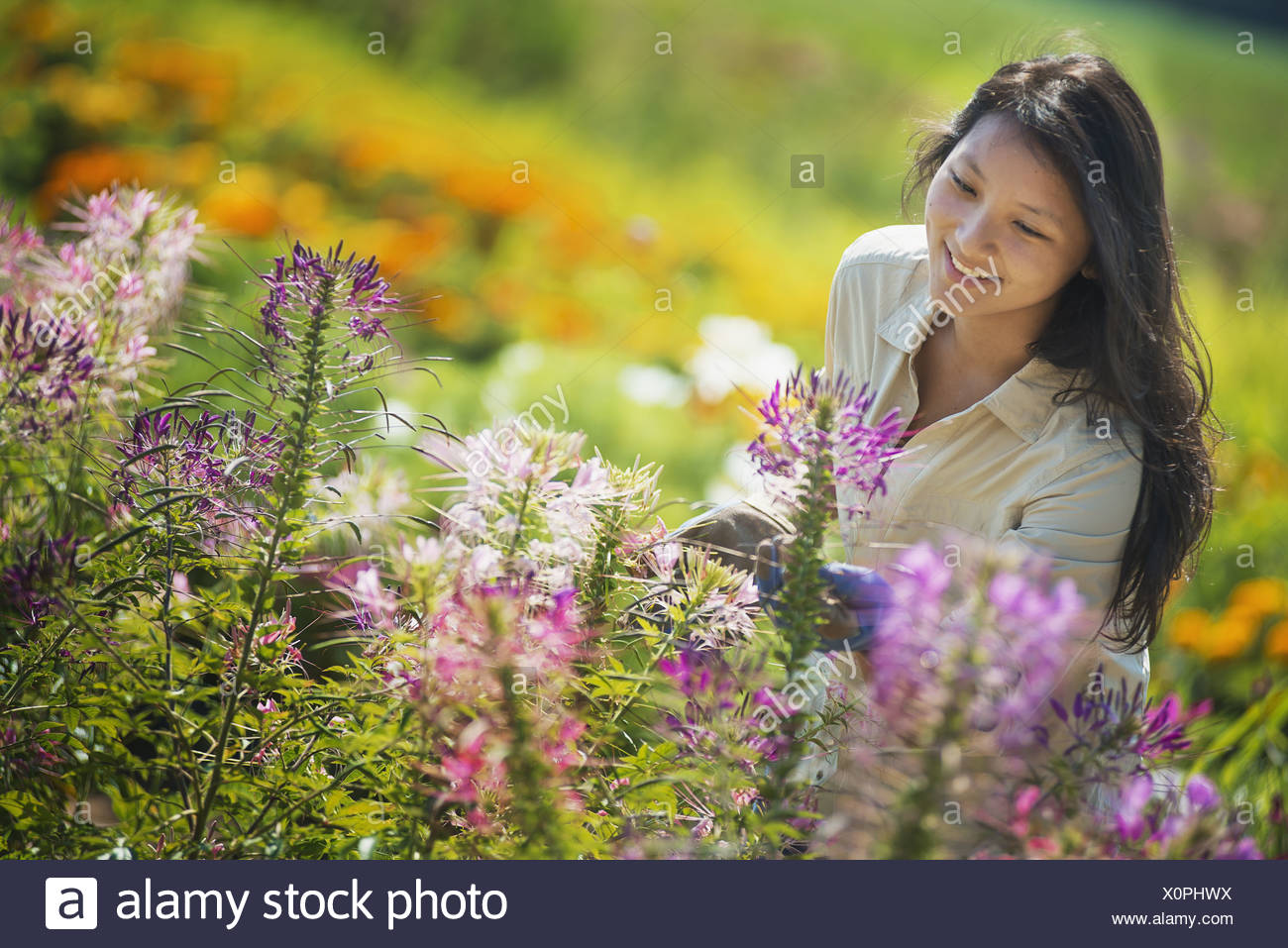 New York state USA young woman in garden surrounding by flowers - Stock Image