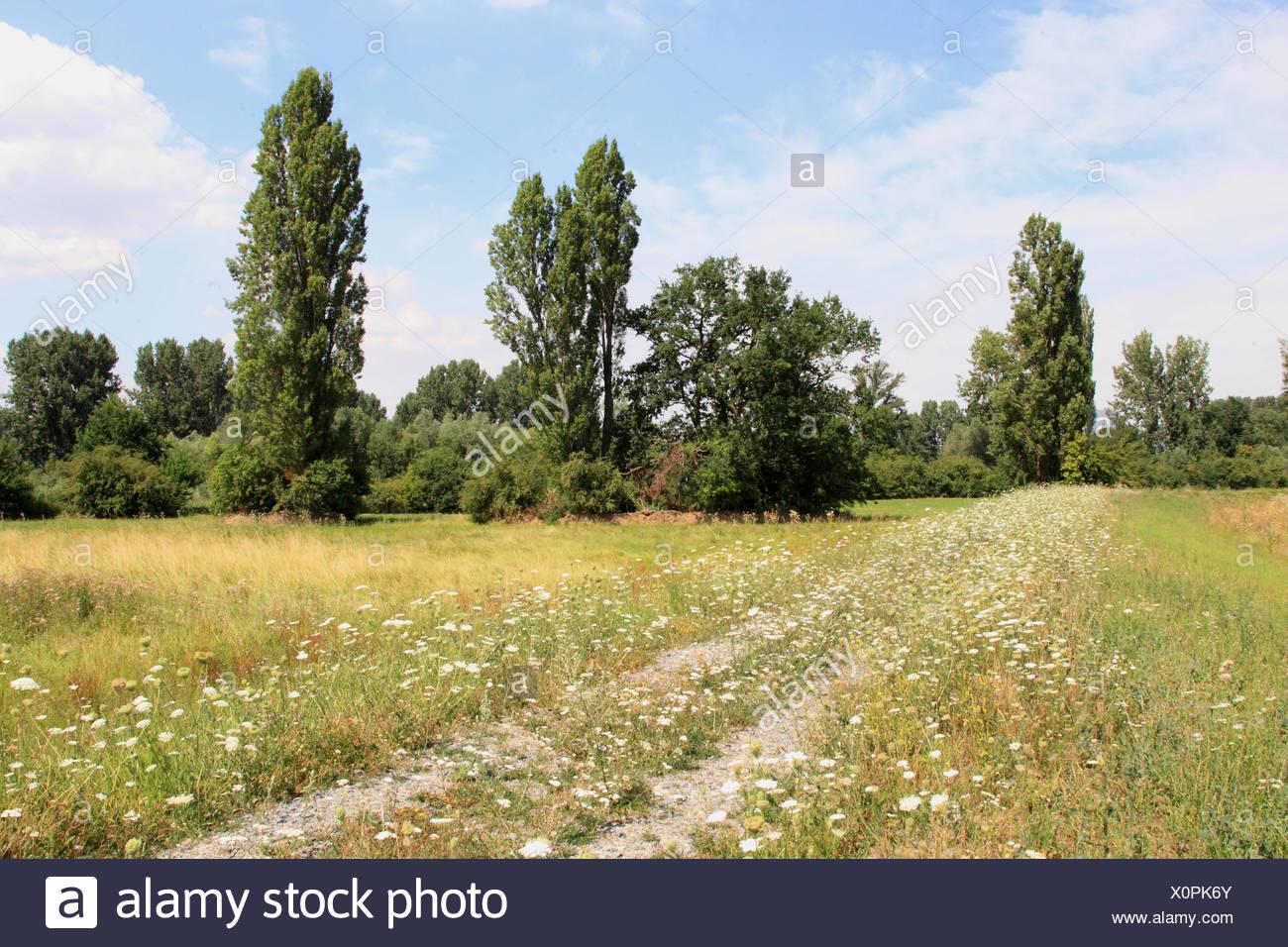 pastureland in summer - Stock Image