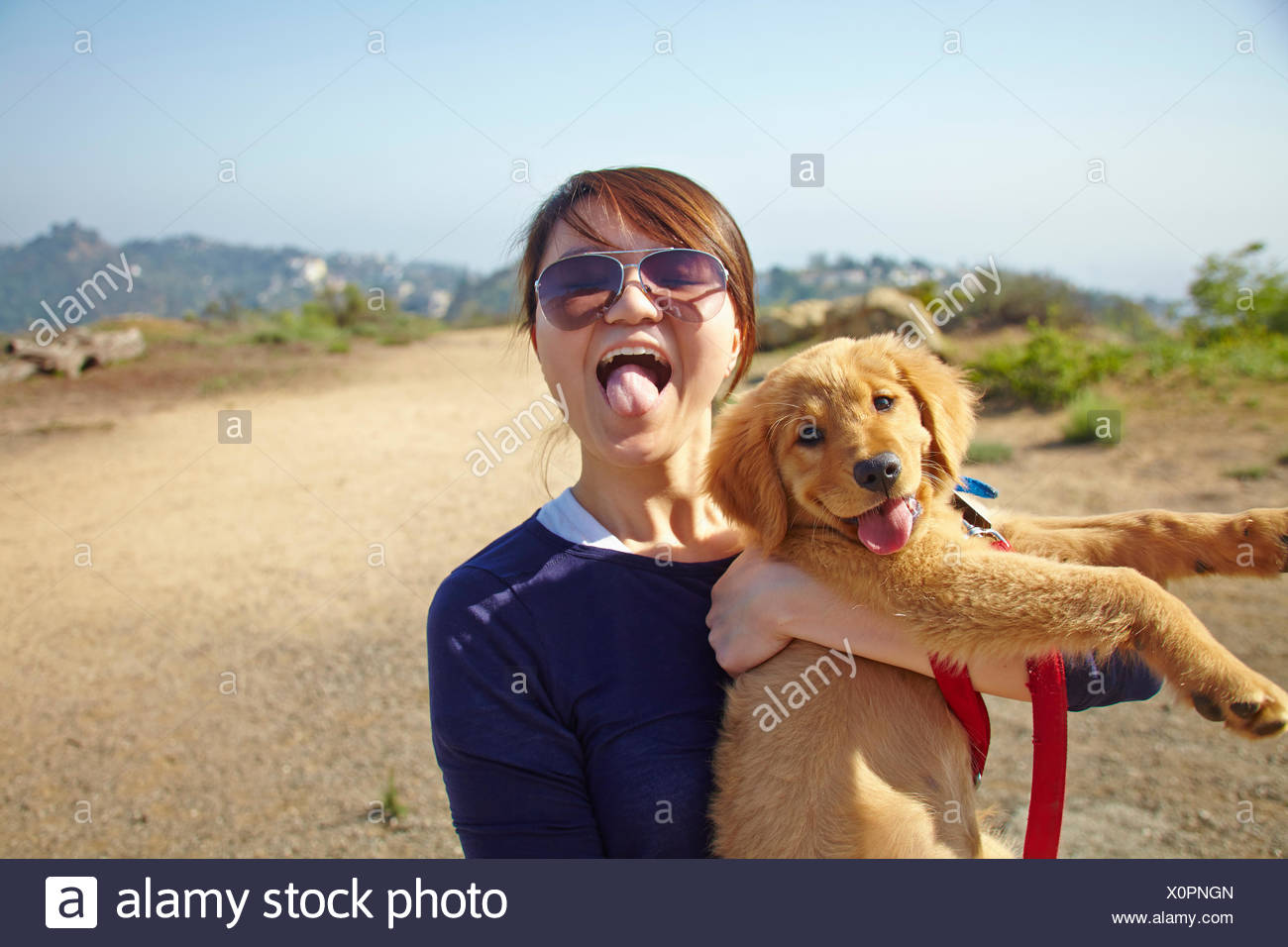Young woman holding labrador puppy, tongues out - Stock Image