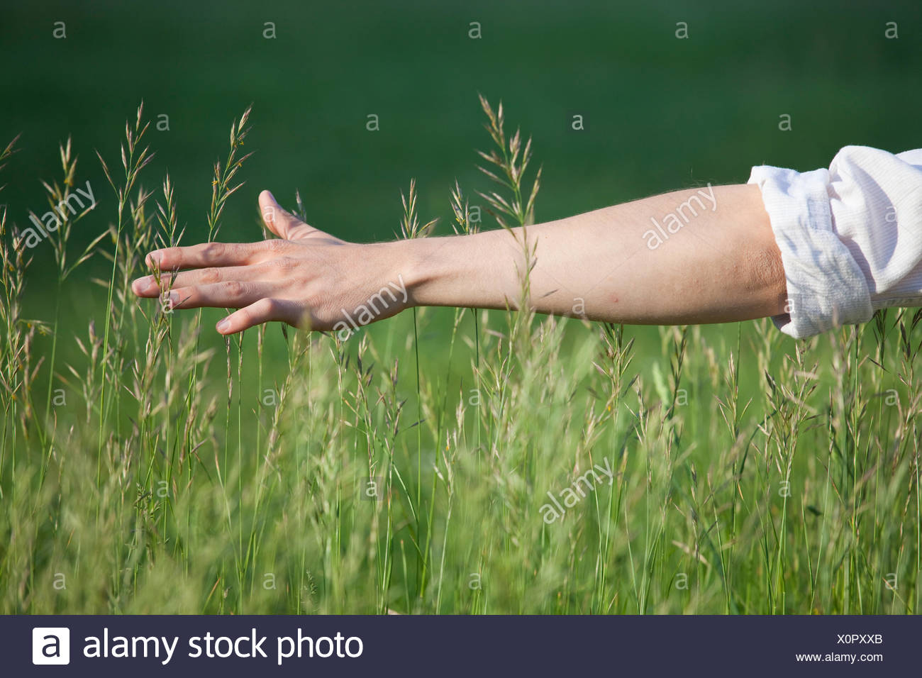enjoyment,relaxation,grass,arm Stock Photo