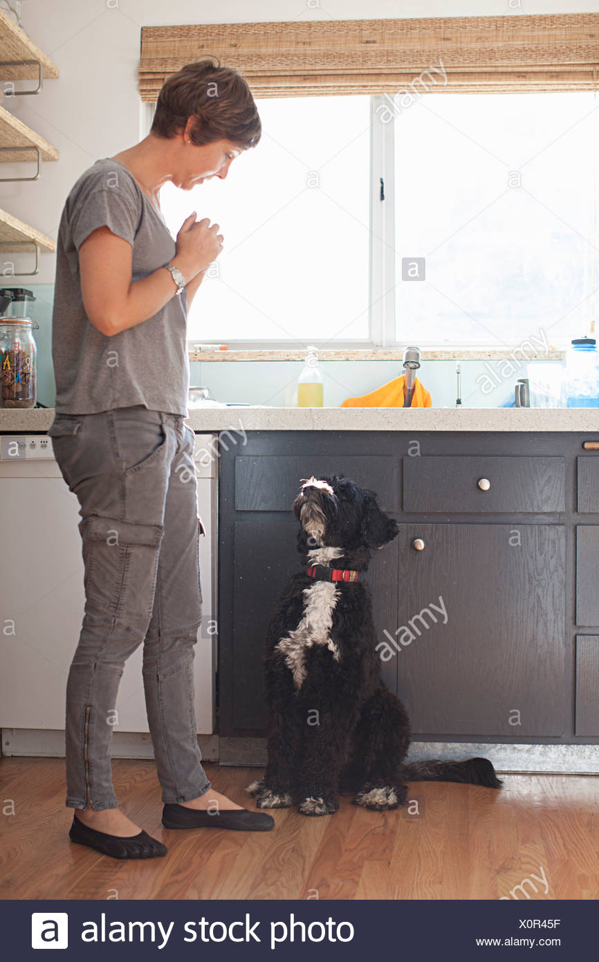 Mature woman and her pet dog in kitchen - Stock Image