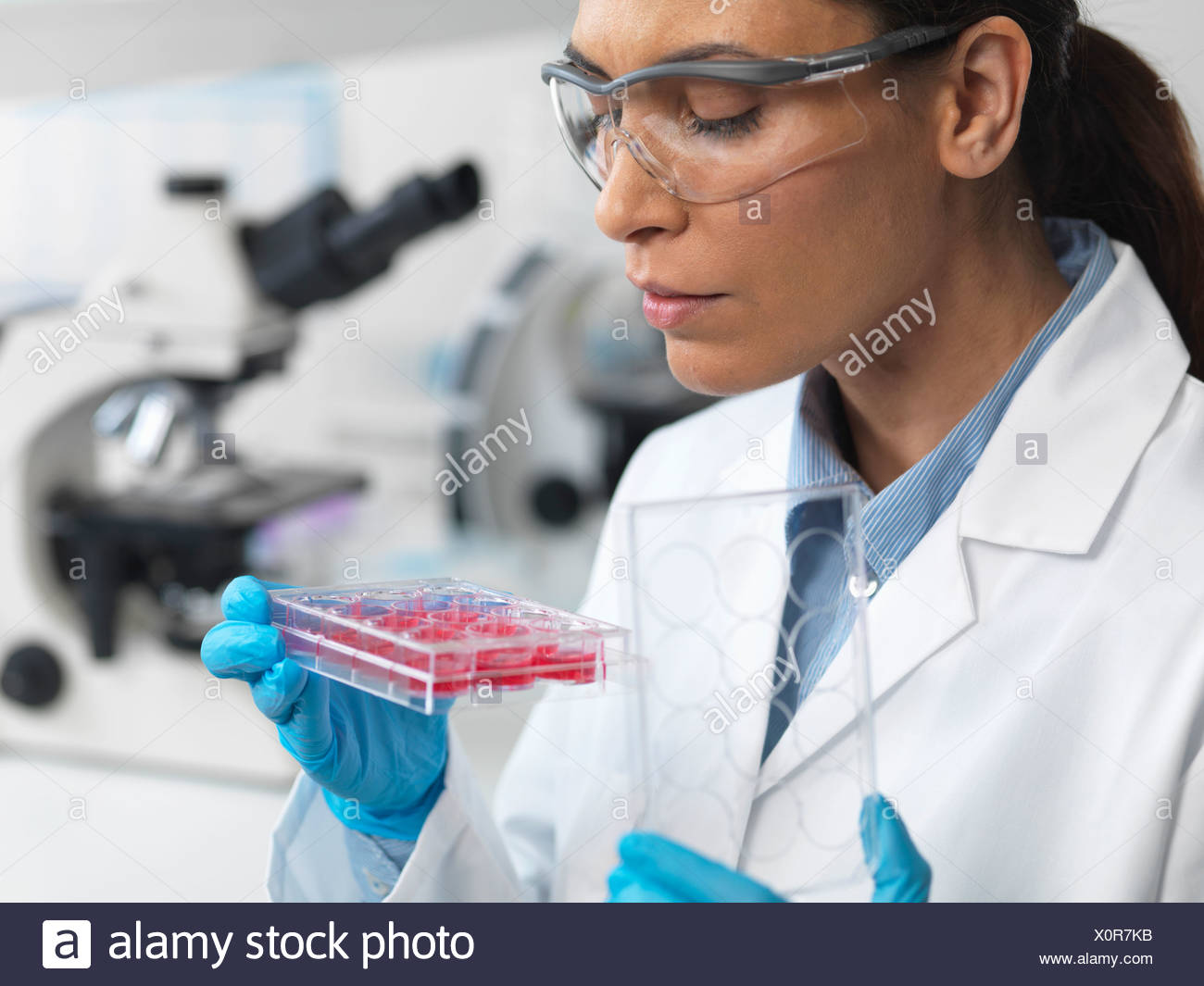 Stem cell research. Female scientist examining cell cultures in multiwell tray - Stock Image