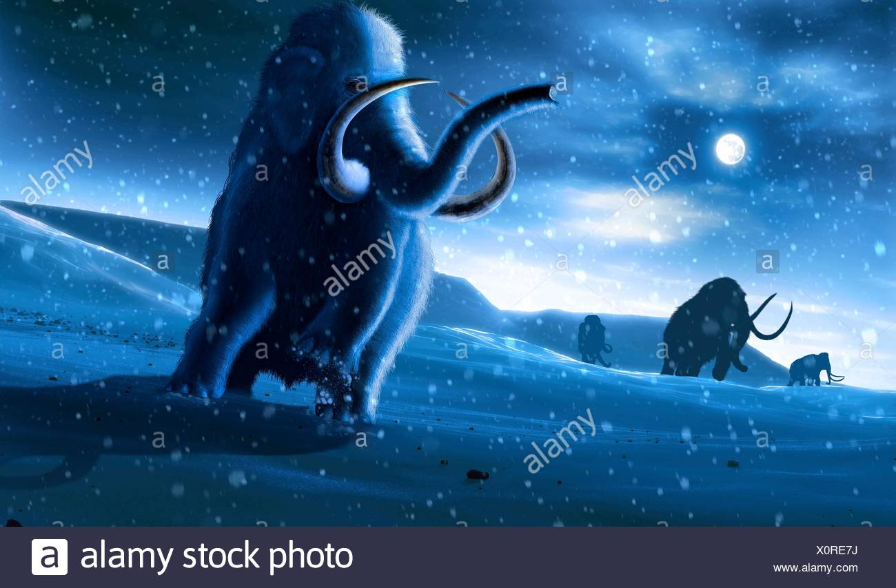 Artwork of the woolly mammoth (Mammuthus primigenius), or tundra mammoth. This animal lived during the Pleistocene epoch and into the early Holocene, and as such coexisted with humans. It was roughly the same size as a modern African elephant. Covered in thick hair, it was well adapted to the cold environment in which it lived - in northern America, Europa and Asia. - Stock Image