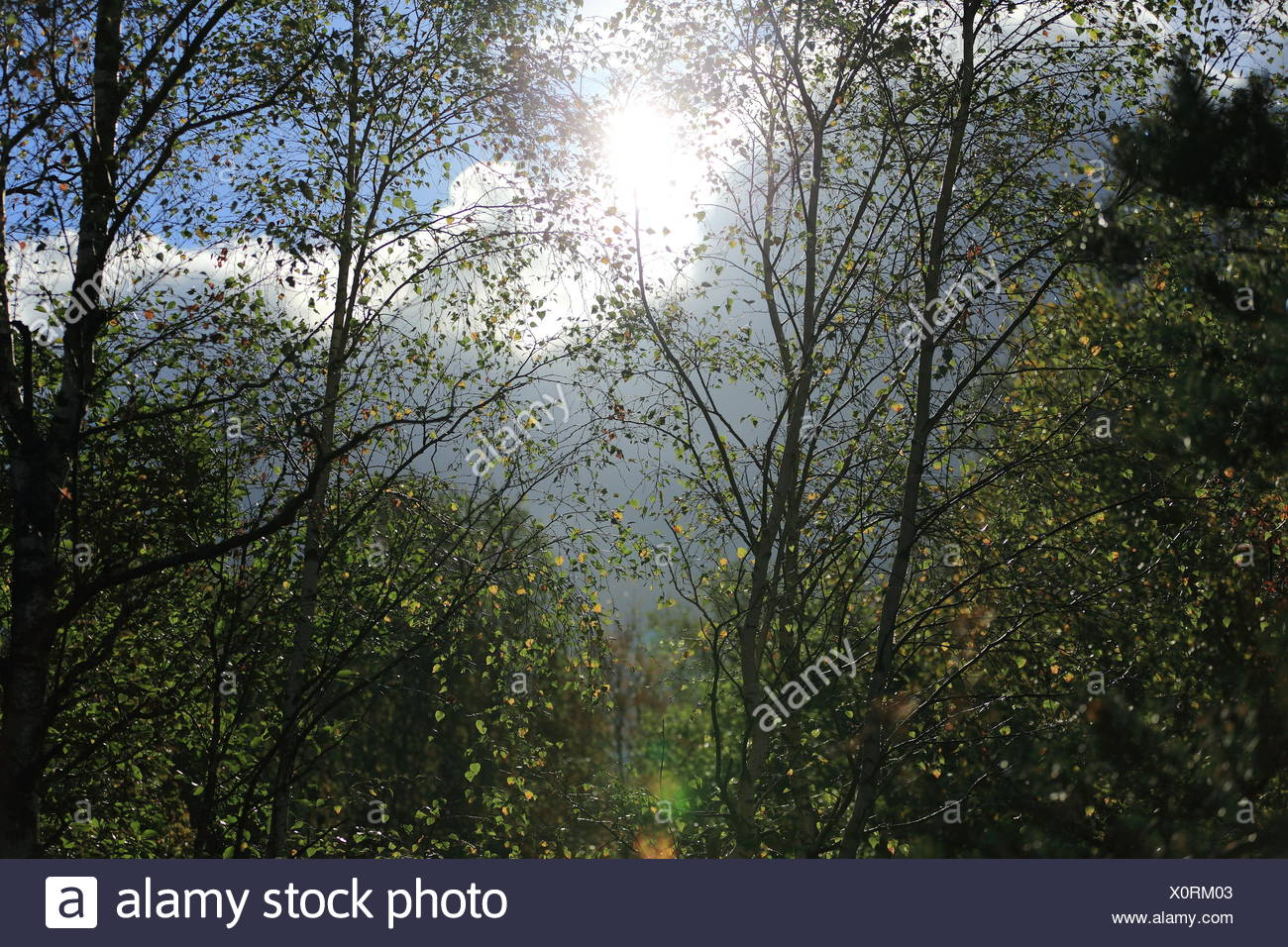 Sun Shining Through Branches - Stock Image