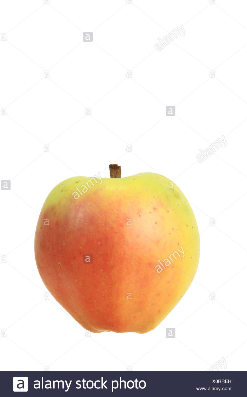 Apple (Malus domestica), Westfield Seek-no-Further or Yellow Bellefleur variety - Stock Image