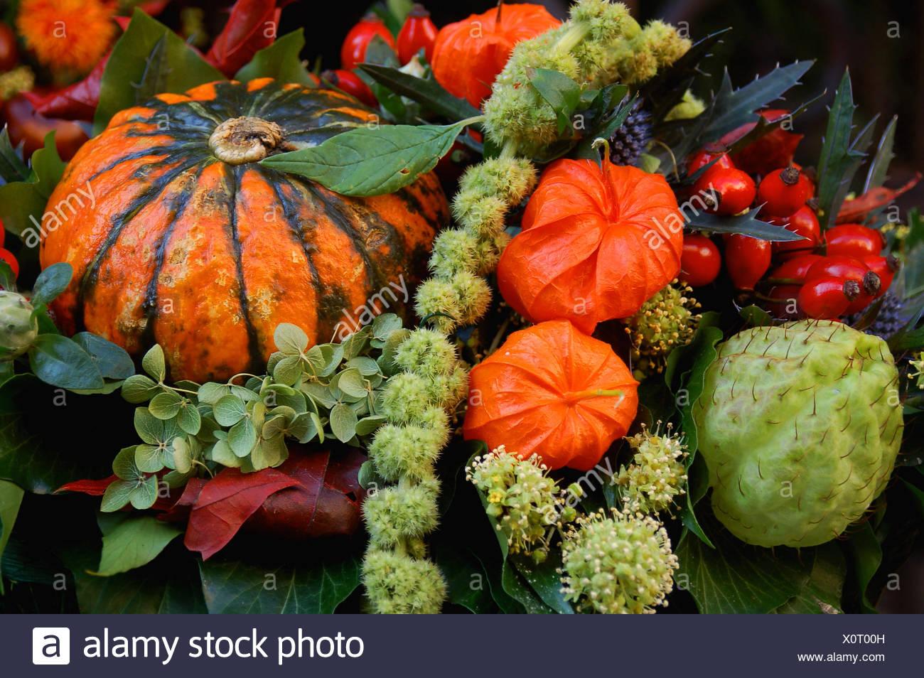 deco autumn colours halloween decoration pumpkin plant flower