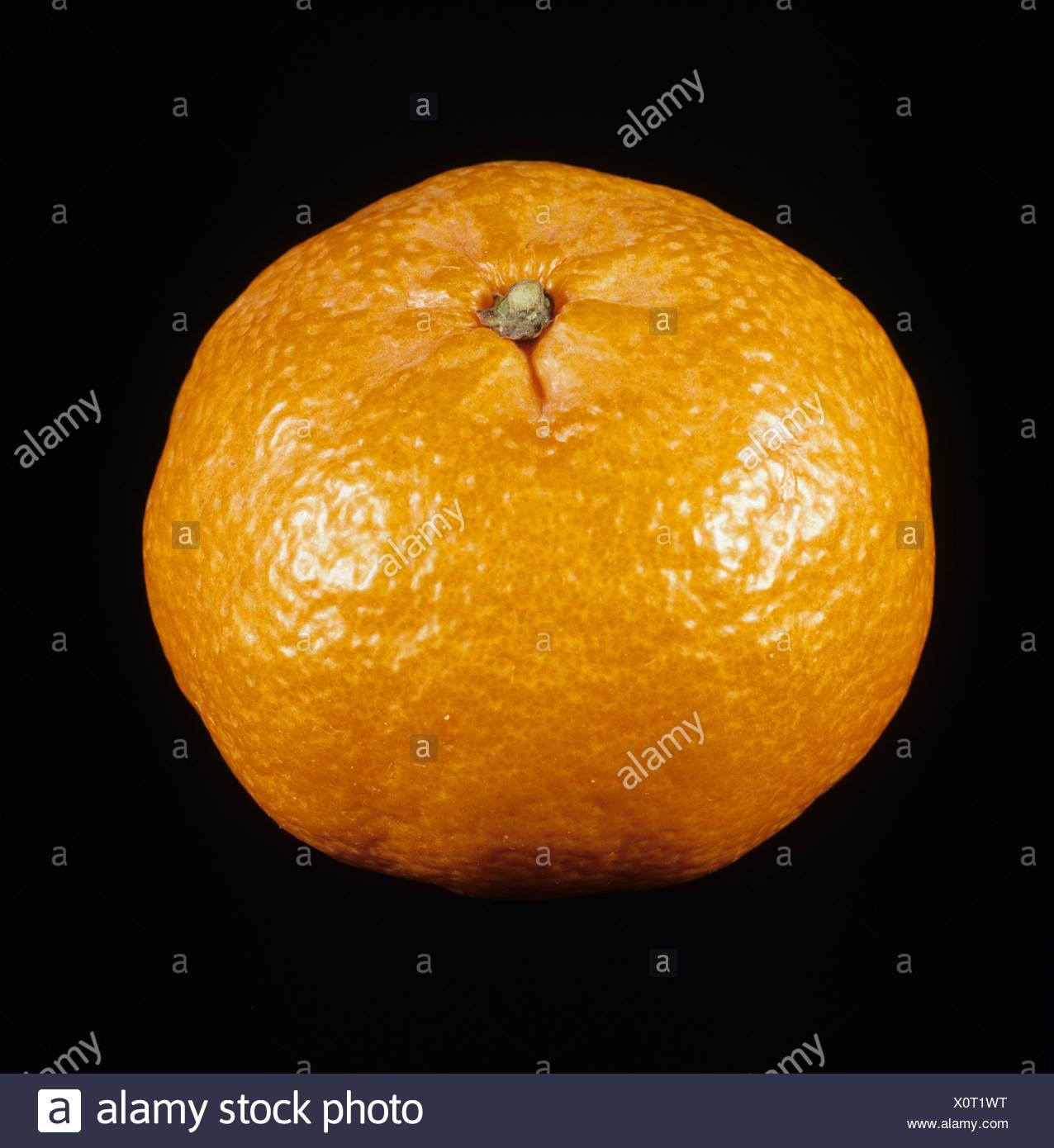 Whole mandarin fruit variety Fortune - Stock Image