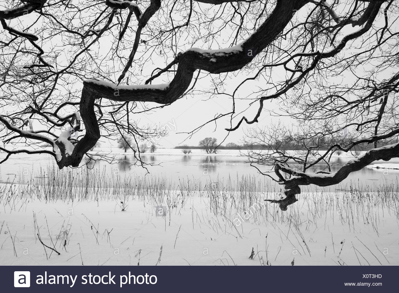 River Elbe in winter, Germany, Lower Saxony, Wendland - Stock Image