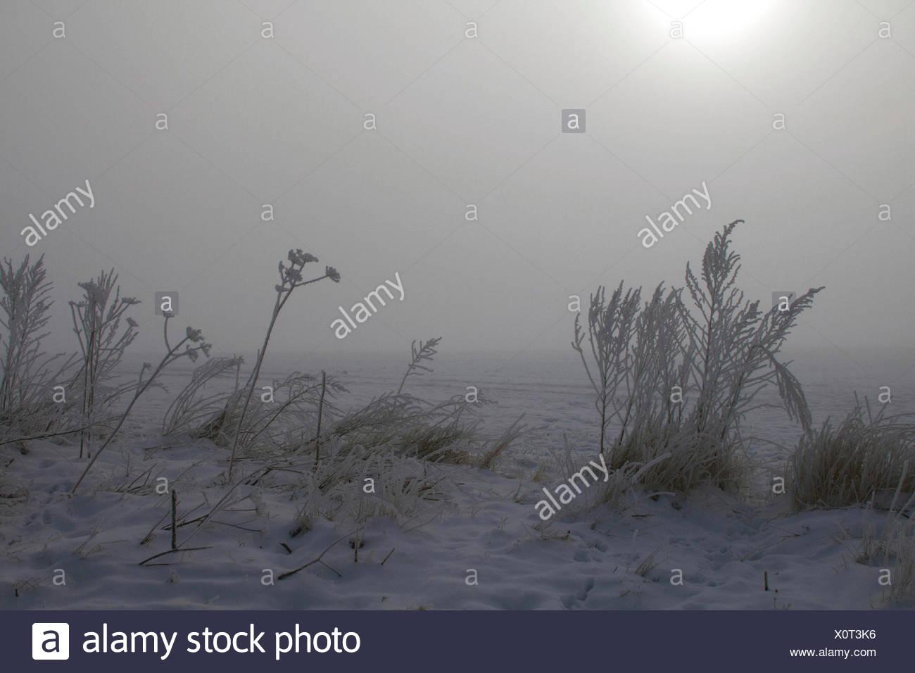 hoar frost at sunrise in mist, Germany, Mecklenburg-Western Pomerania Stock Photo